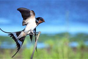 Los mejores prismáticos para aves y naturaleza